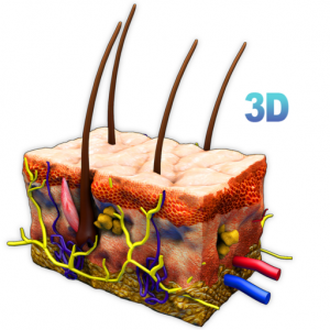 Skin Section 3D Mac OS X