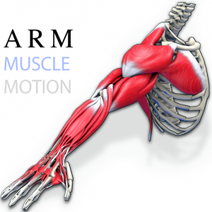 Arm Muscles Motion Mac OS X