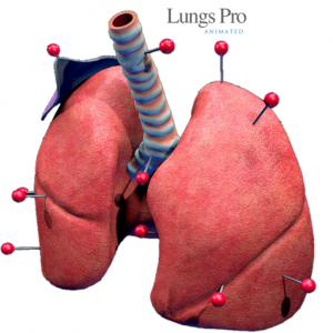 LungsProAnimated Mac OS X